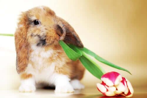 a troca de pelos em coelhos e furões