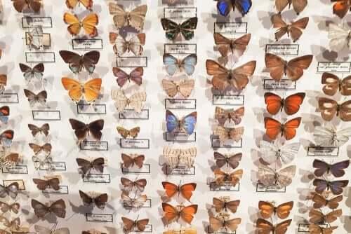 O museu entomológico CURLA: onde as borboletas são as estrelas