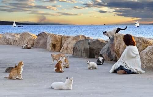 Por que existem tantos gatos no planeta?