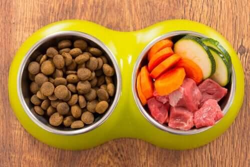 Comida caseira ou comercial para cães?