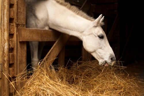 Benefícios de uma dieta adequada para os cavalos