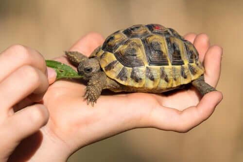 Os 3 problemas de saúde mais comuns em tartarugas domésticas