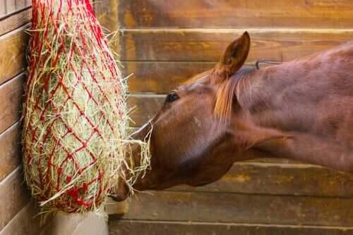 Cavalo se alimentando bem