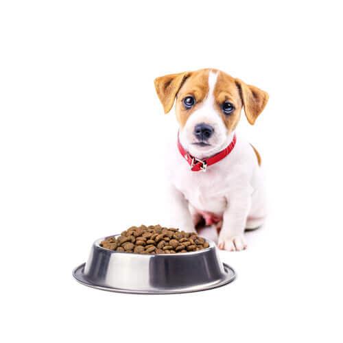 Dicas para mudar a alimentação do cão.