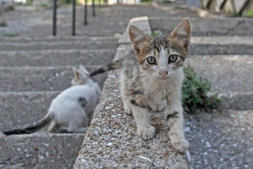 Posso receber uma multa por alimentar gatos de rua?