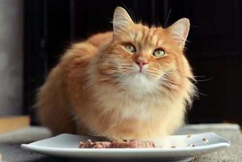 Benefícios dos alimentos úmidos para gatos