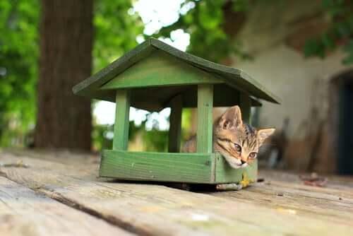 4 dicas para construir uma casa para gatos
