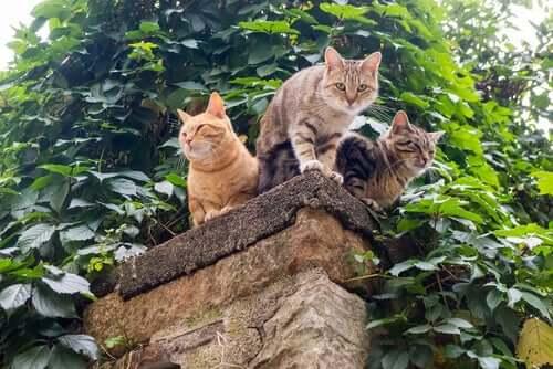 manter os gatos seguros ao ar livre