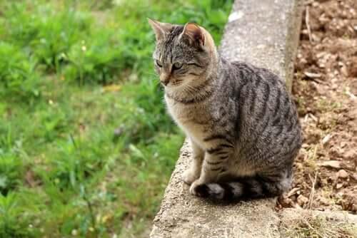 Como manter os gatos seguros ao ar livre