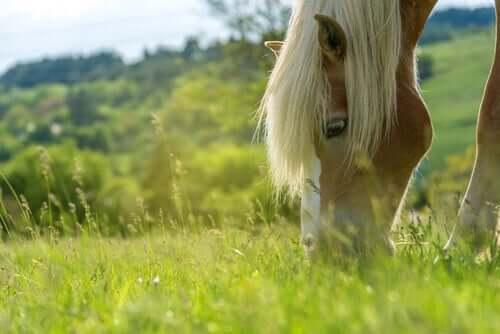 Benefícios de uma dieta adequada para os cavalos: grama
