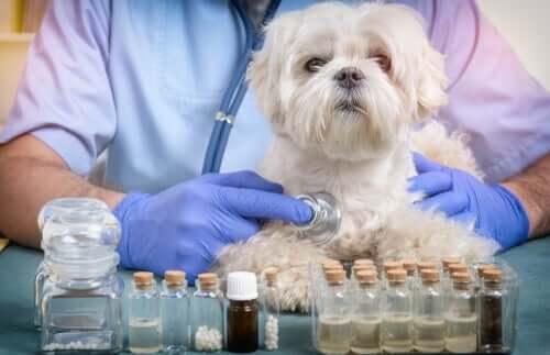 Médico examinando cachorro pequeno