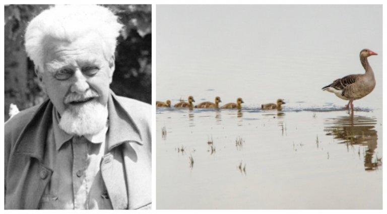 Konrad Lorenz e os padrões de comportamento animal
