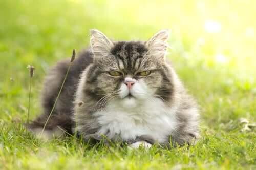 Gato sentado na grama