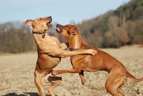 Mudanças no comportamento do seu cão