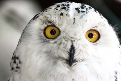 Como é a visão das aves de rapina?