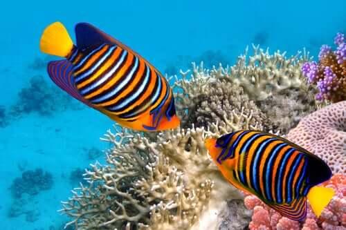 5 curiosidades sobre os peixes coloridos