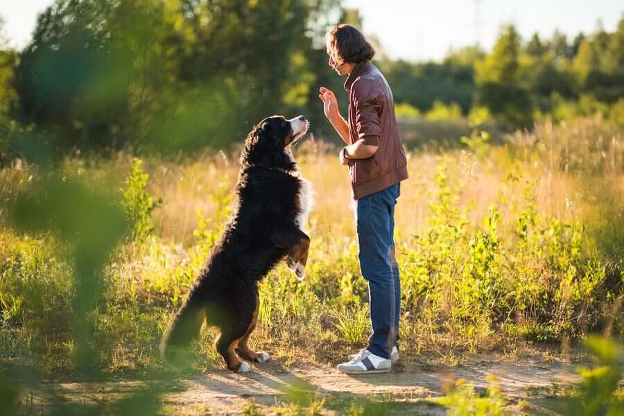 Objetivos do treinamento para os cães