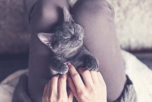 Quanto tempo os gatos precisam dormir?