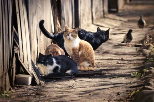 Quantos gatos existem no mundo?