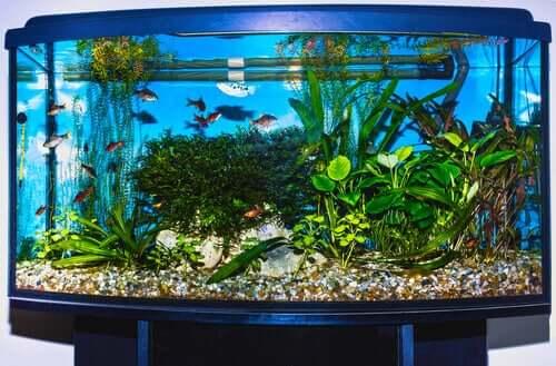Como resfriar o seu aquário durante o verão?