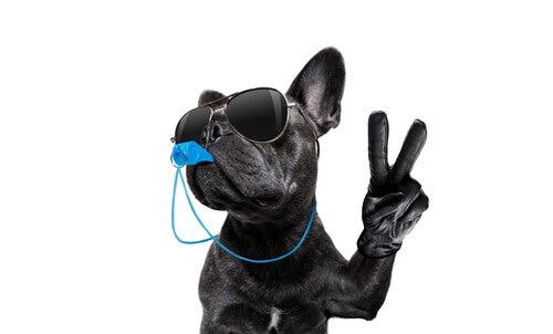 Treinar seu cão com a técnica do apito