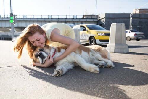 lidar com a perda de um animal de estimação