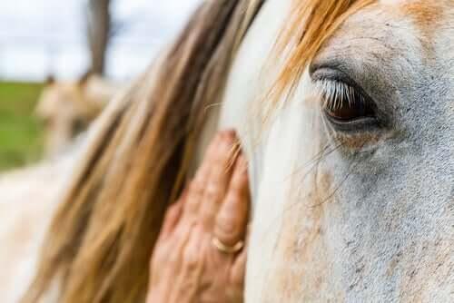 Como lidar com a alergia a cavalos
