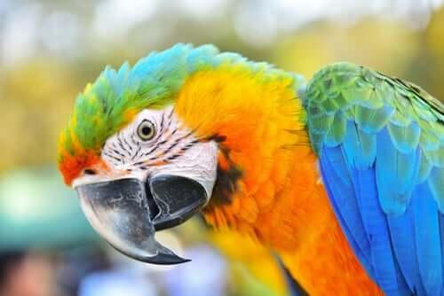A arara: uma ave muito inteligente