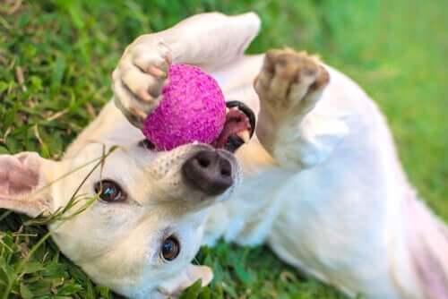 Os 5 brinquedos que os cães mais gostam