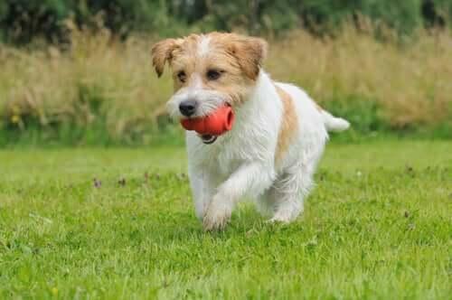 Os brinquedos que os cães mais gostam