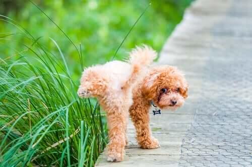 comportamentos de um cachorro após a castração