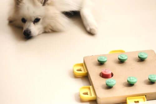 Jogos que contribuem para a estimulação mental dos cães