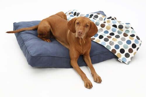 tipos diferentes de camas para cães