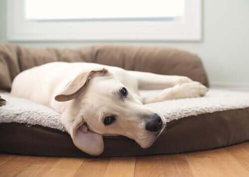 3 tipos diferentes de camas para cães