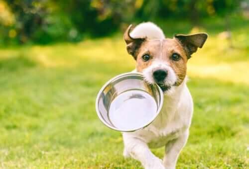 Razões nutricionais para o cachorro lamber a parede