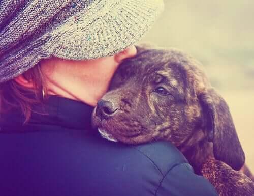 O olfato do cachorro é treinado para detectar o câncer?