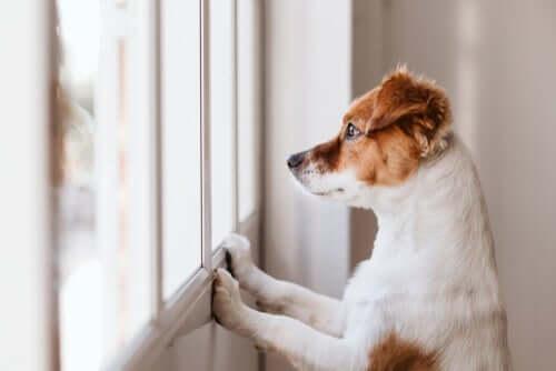 Por que meu cachorro gosta de lamber a parede?