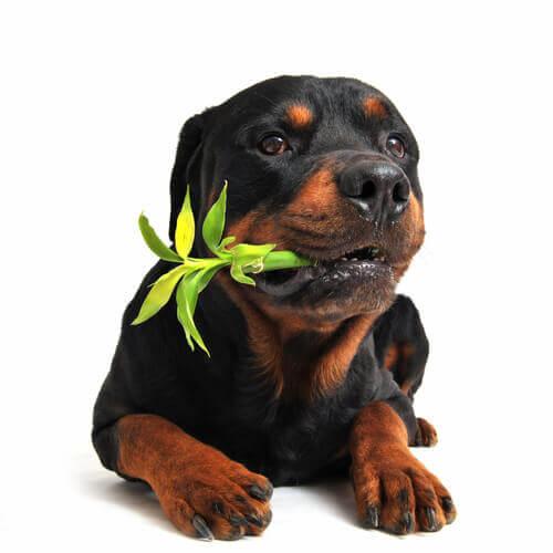 Plantas medicinais para os animais