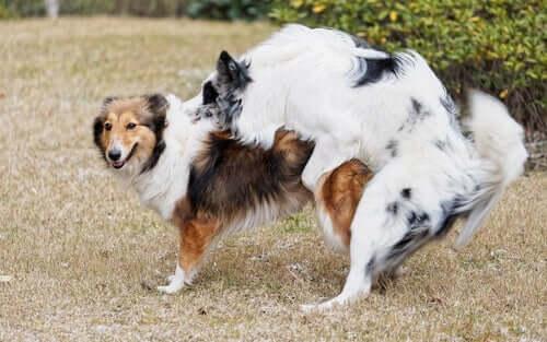 Principais comportamentos de um cachorro após a castração