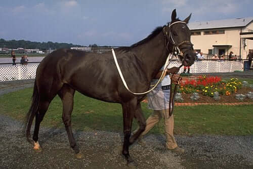 criar um cavalo puro-sangue