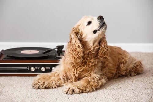Quais são os efeitos da música nos animais?