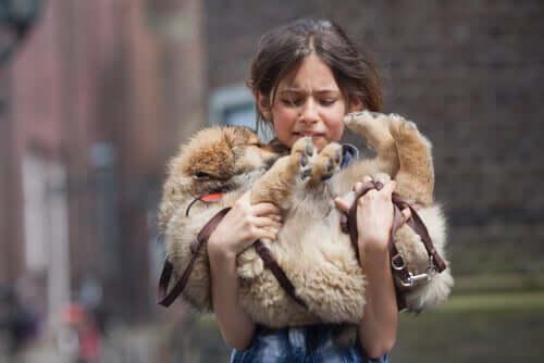 Como lidar com a perda de um animal de estimação?
