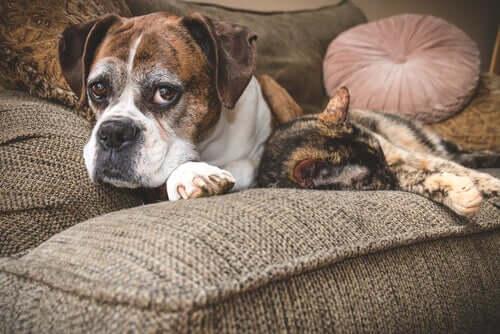 As melhores dicas para cuidar de cães e gatos idosos