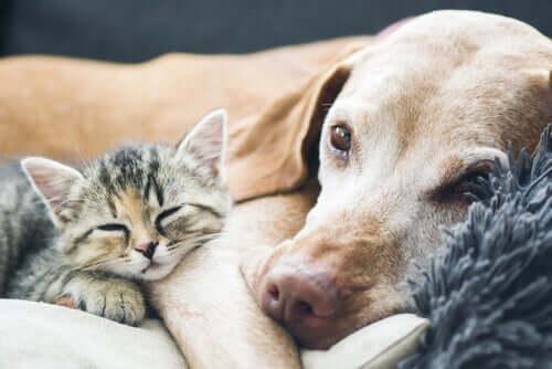 dicas para cuidar de cães e gatos idosos