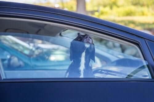 Deixar os animais de estimação dentro de carros é uma má ideia