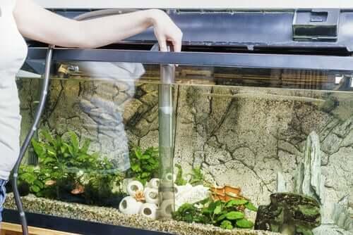 limpar o aquário