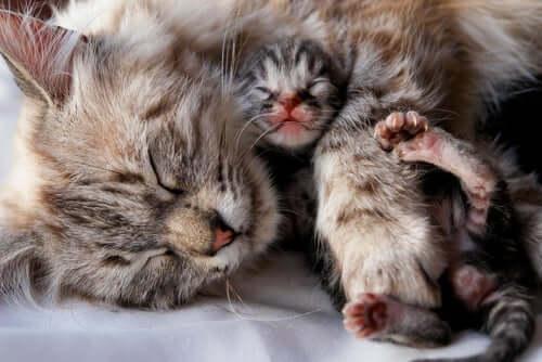 cuidar de um gatinho recém-nascido