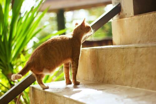 Como cuidar de um gato que tenha uma pata amputada