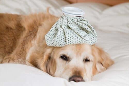A gripe também pode afetar os animais?