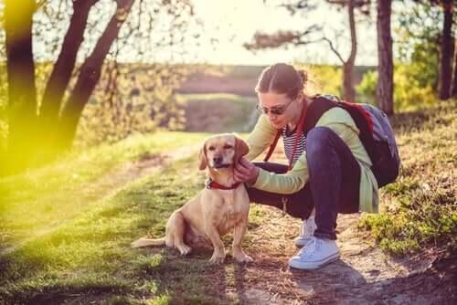 Hipotireoidismo canino: causas e tratamento